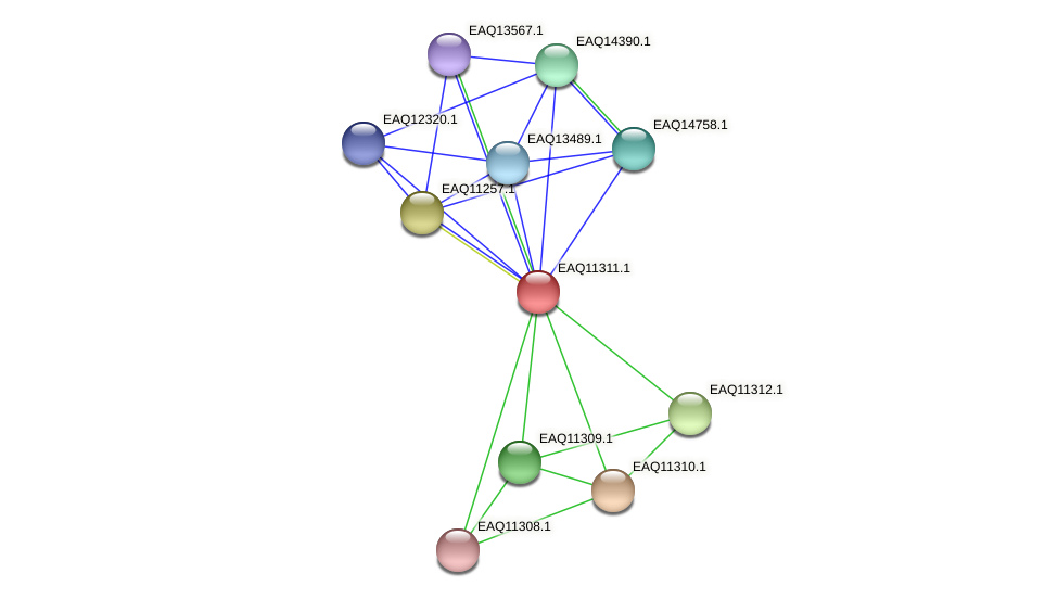 RB2654_04761 protein (Maritimibacter alkaliphilus) - STRING interaction network