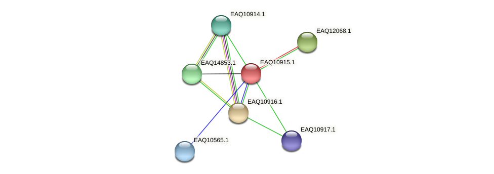 RB2654_04809 protein (Maritimibacter alkaliphilus) - STRING interaction network