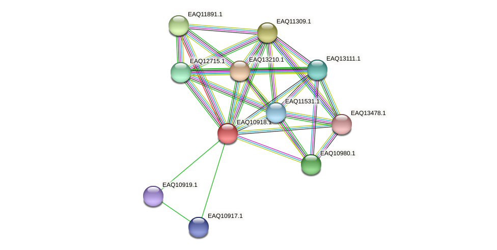 RB2654_04824 protein (Maritimibacter alkaliphilus) - STRING interaction network