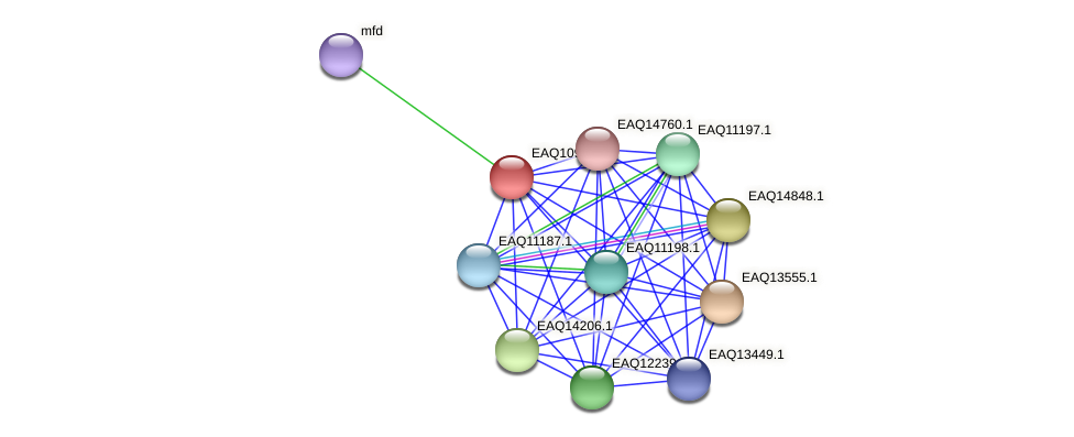 RB2654_04844 protein (Maritimibacter alkaliphilus) - STRING interaction network