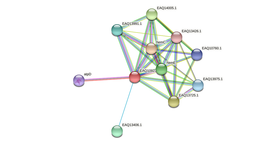 RB2654_04849 protein (Maritimibacter alkaliphilus) - STRING interaction network
