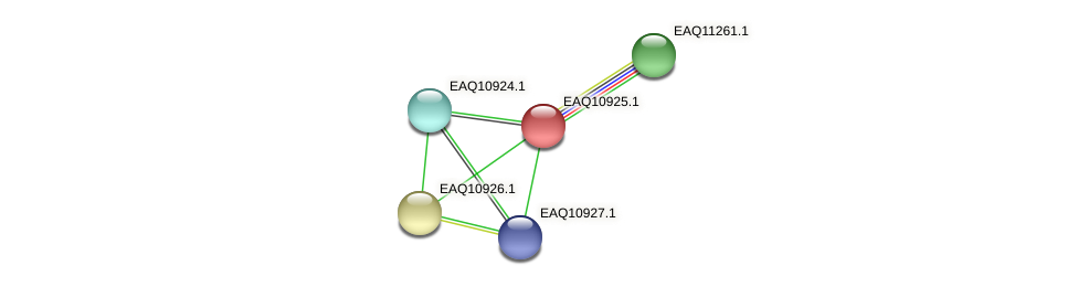 RB2654_04859 protein (Maritimibacter alkaliphilus) - STRING interaction network
