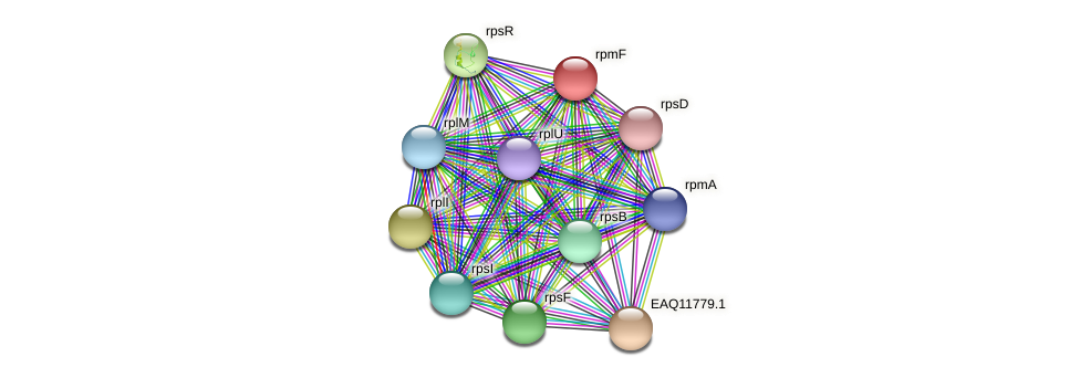 rpmF protein (Maritimibacter alkaliphilus) - STRING interaction network