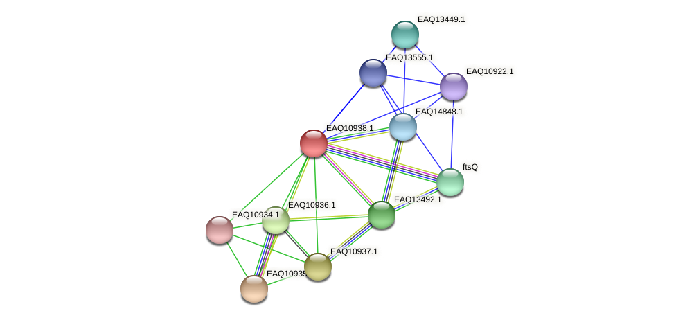 RB2654_04924 protein (Maritimibacter alkaliphilus) - STRING interaction network