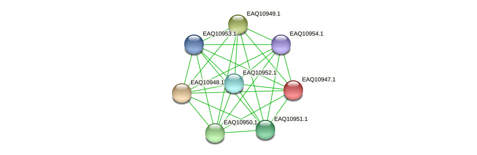 RB2654_04969 protein (Maritimibacter alkaliphilus) - STRING interaction network