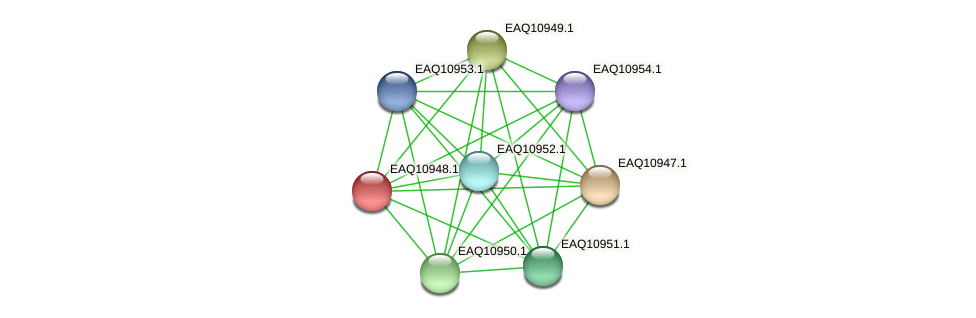RB2654_04974 protein (Maritimibacter alkaliphilus) - STRING interaction network