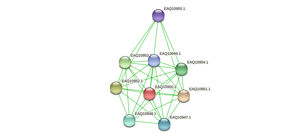 RB2654_04984 protein (Maritimibacter alkaliphilus) - STRING interaction network
