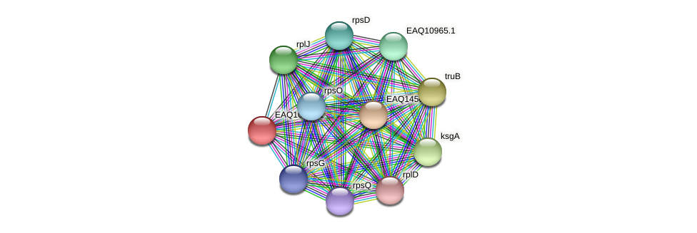 RB2654_04994 protein (Maritimibacter alkaliphilus) - STRING interaction network