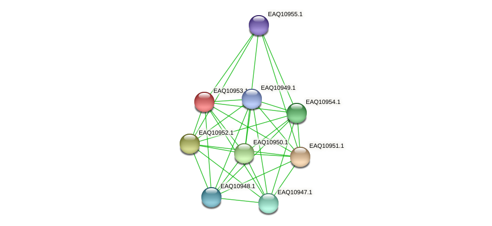 RB2654_04999 protein (Maritimibacter alkaliphilus) - STRING interaction network