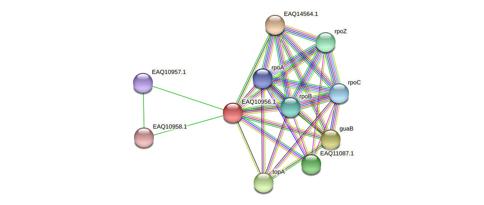 RB2654_05014 protein (Maritimibacter alkaliphilus) - STRING interaction network