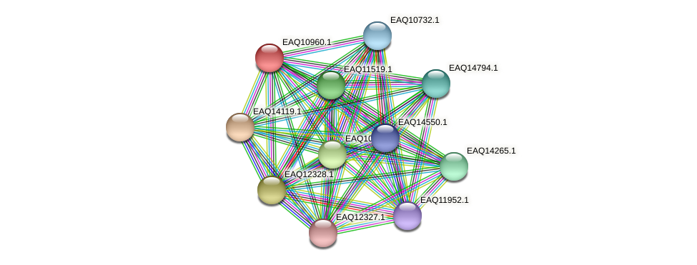 RB2654_05034 protein (Maritimibacter alkaliphilus) - STRING interaction network
