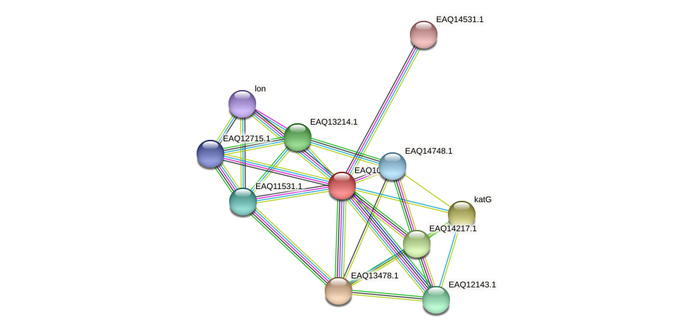 RB2654_05039 protein (Maritimibacter alkaliphilus) - STRING interaction network