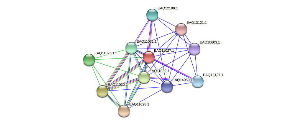 RB2654_05065 protein (Maritimibacter alkaliphilus) - STRING interaction network