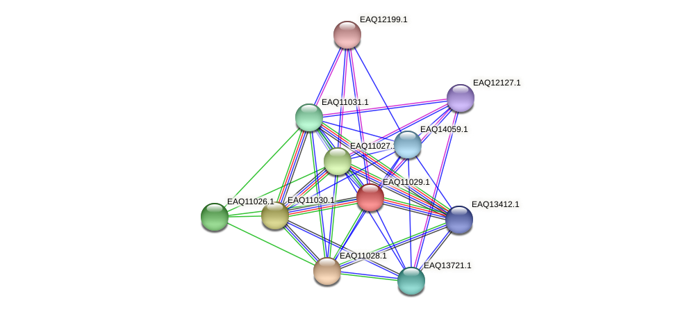 RB2654_05075 protein (Maritimibacter alkaliphilus) - STRING interaction network