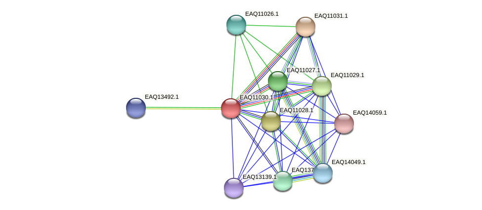 RB2654_05080 protein (Maritimibacter alkaliphilus) - STRING interaction network