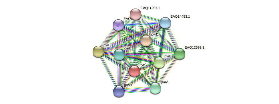 RB2654_05090 protein (Maritimibacter alkaliphilus) - STRING interaction network