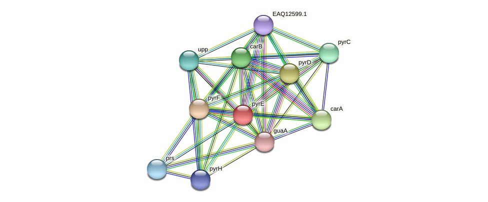 pyrE protein (Maritimibacter alkaliphilus) - STRING interaction network