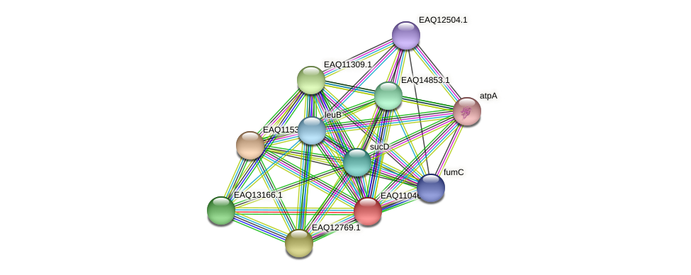 RB2654_05160 protein (Maritimibacter alkaliphilus) - STRING interaction network