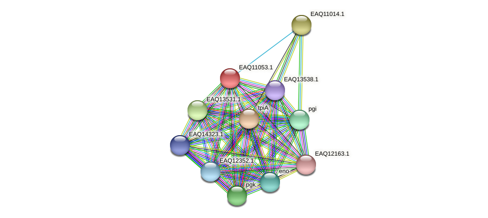 RB2654_05195 protein (Maritimibacter alkaliphilus) - STRING interaction network