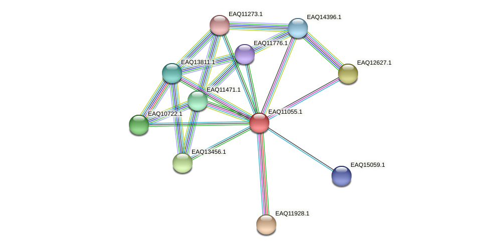 RB2654_05205 protein (Maritimibacter alkaliphilus) - STRING interaction network