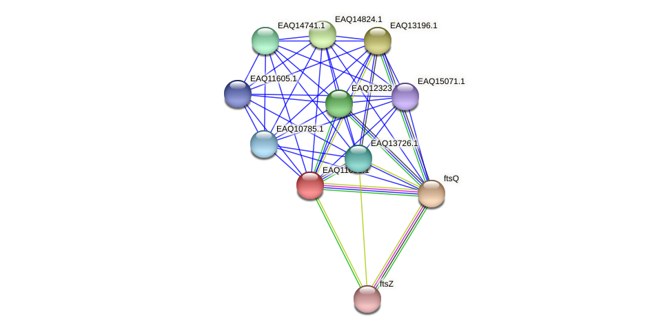 RB2654_05210 protein (Maritimibacter alkaliphilus) - STRING interaction network