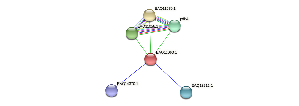 RB2654_05230 protein (Maritimibacter alkaliphilus) - STRING interaction network