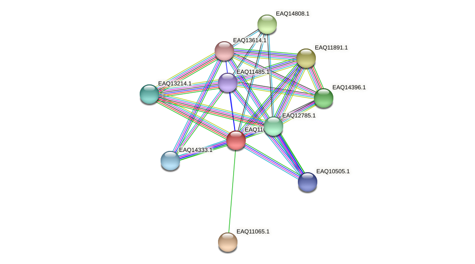 RB2654_05250 protein (Maritimibacter alkaliphilus) - STRING interaction network