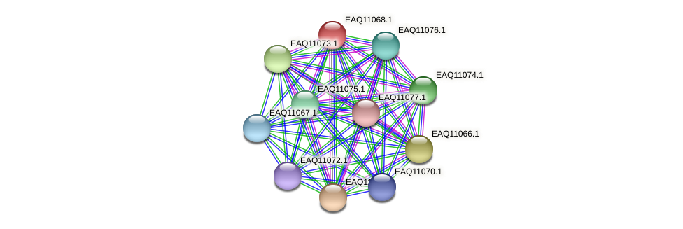 RB2654_05270 protein (Maritimibacter alkaliphilus) - STRING interaction network