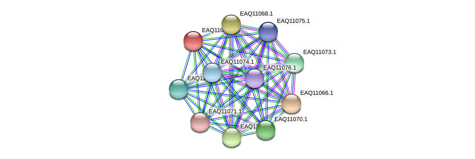 RB2654_05290 protein (Maritimibacter alkaliphilus) - STRING interaction network