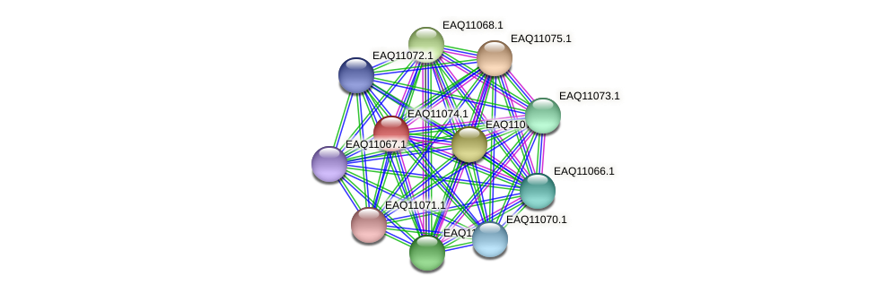 RB2654_05300 protein (Maritimibacter alkaliphilus) - STRING interaction network