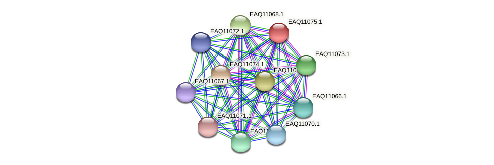 RB2654_05305 protein (Maritimibacter alkaliphilus) - STRING interaction network