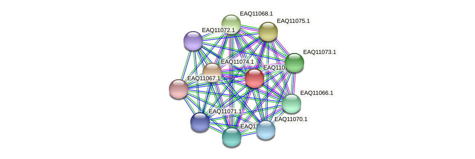 RB2654_05310 protein (Maritimibacter alkaliphilus) - STRING interaction network