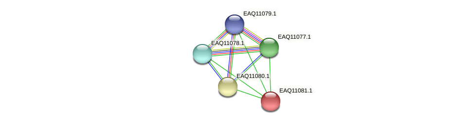RB2654_05335 protein (Maritimibacter alkaliphilus) - STRING interaction network