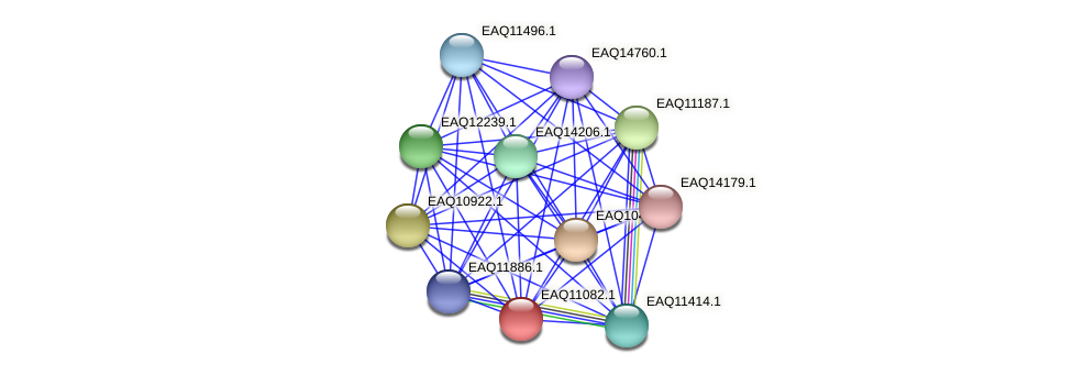 RB2654_05340 protein (Maritimibacter alkaliphilus) - STRING interaction network