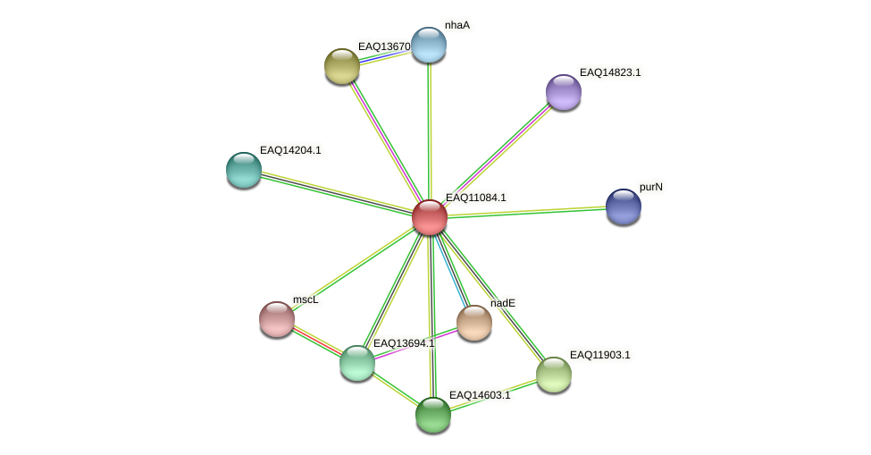 RB2654_05350 protein (Maritimibacter alkaliphilus) - STRING interaction network