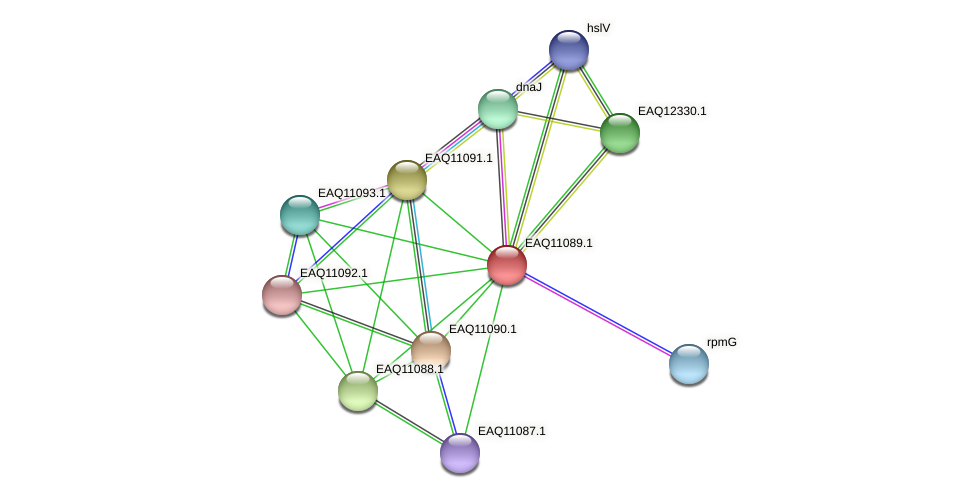 RB2654_05375 protein (Maritimibacter alkaliphilus) - STRING interaction network