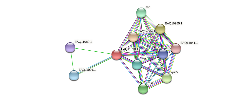 RB2654_05380 protein (Maritimibacter alkaliphilus) - STRING interaction network