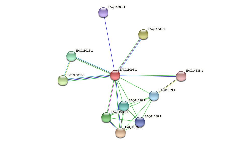 RB2654_05395 protein (Maritimibacter alkaliphilus) - STRING interaction network