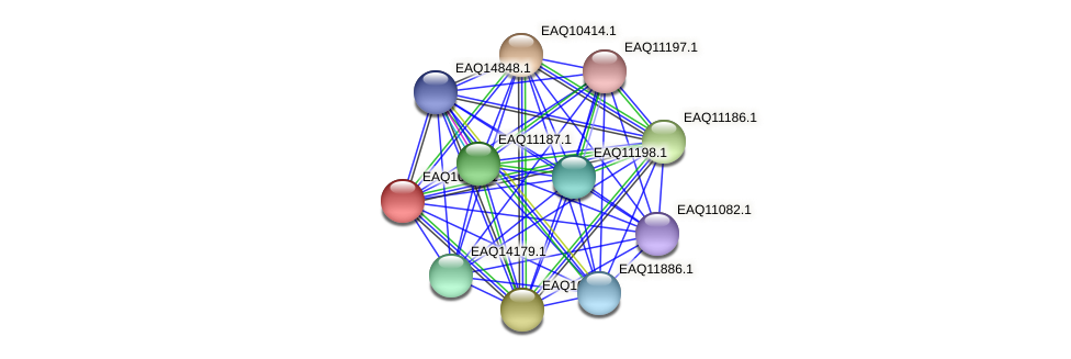 RB2654_05405 protein (Maritimibacter alkaliphilus) - STRING interaction network