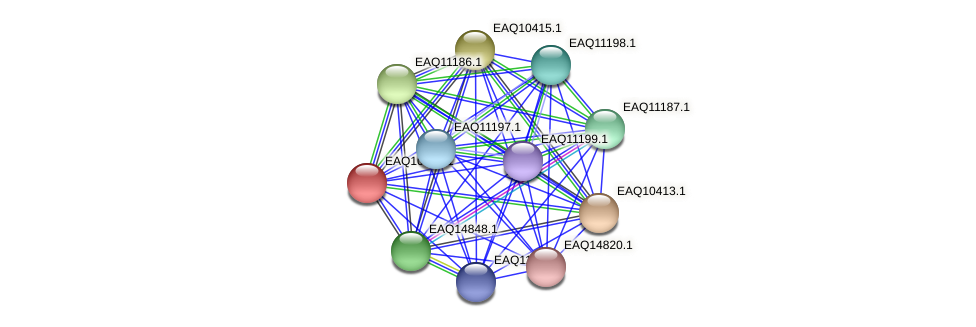 RB2654_05410 protein (Maritimibacter alkaliphilus) - STRING interaction network