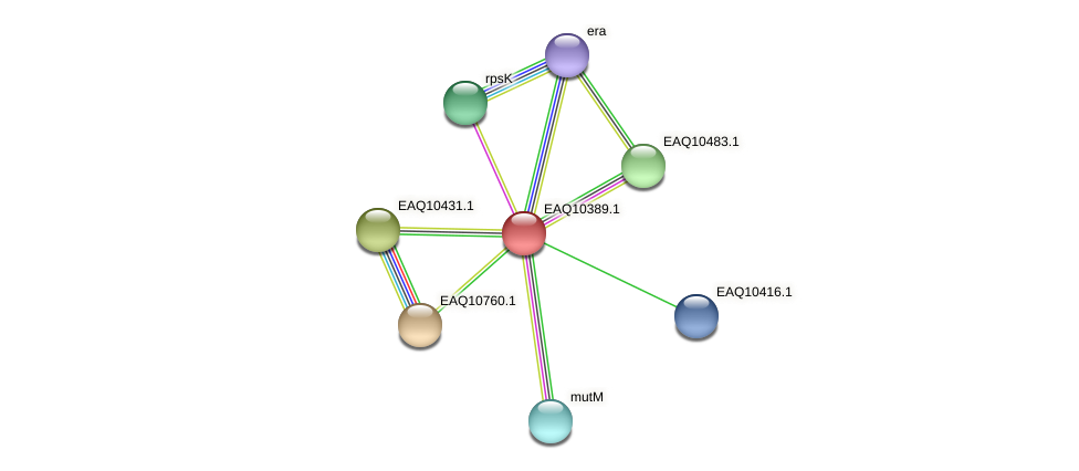RB2654_05425 protein (Maritimibacter alkaliphilus) - STRING interaction network
