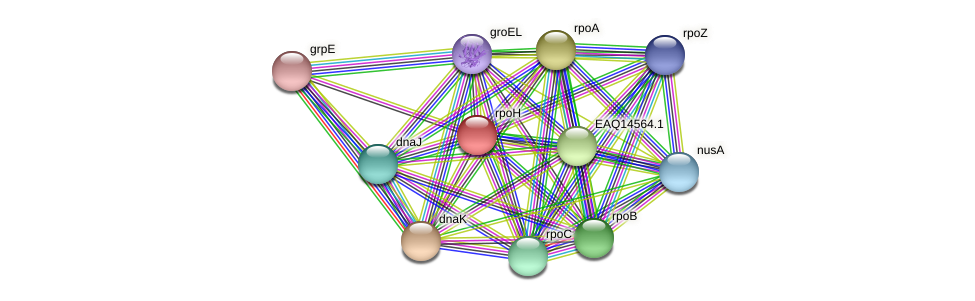 rpoH protein (Maritimibacter alkaliphilus) - STRING interaction network