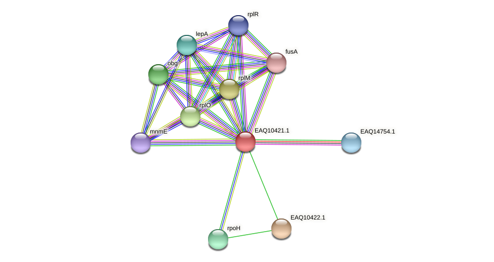 RB2654_05460 protein (Maritimibacter alkaliphilus) - STRING interaction network