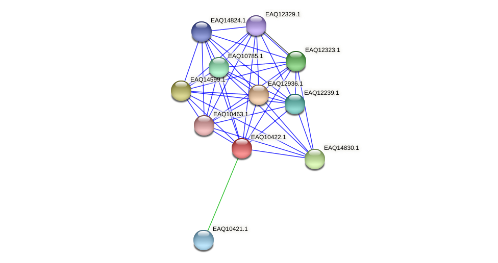 RB2654_05465 protein (Maritimibacter alkaliphilus) - STRING interaction network