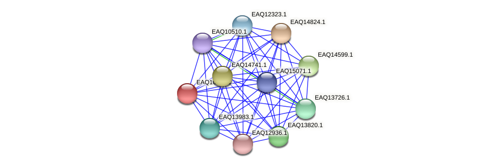 RB2654_05480 protein (Maritimibacter alkaliphilus) - STRING interaction network