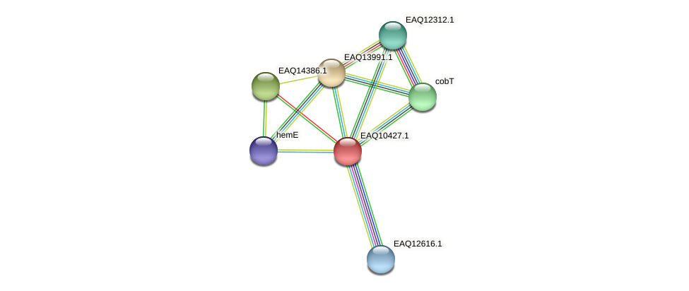 RB2654_05490 protein (Maritimibacter alkaliphilus) - STRING interaction network