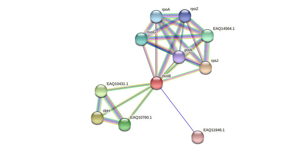 RB2654_05500 protein (Maritimibacter alkaliphilus) - STRING interaction network