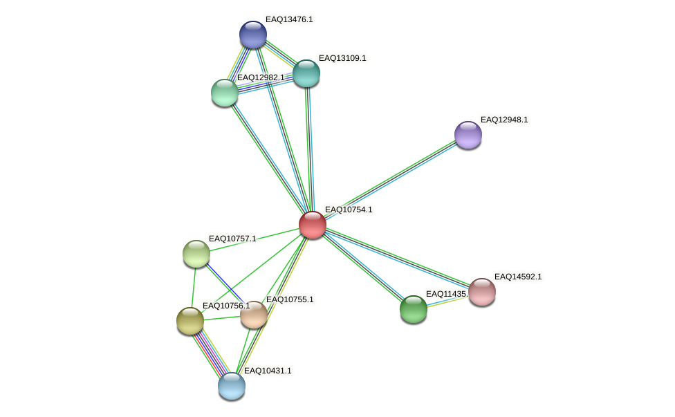 RB2654_05517 protein (Maritimibacter alkaliphilus) - STRING interaction network