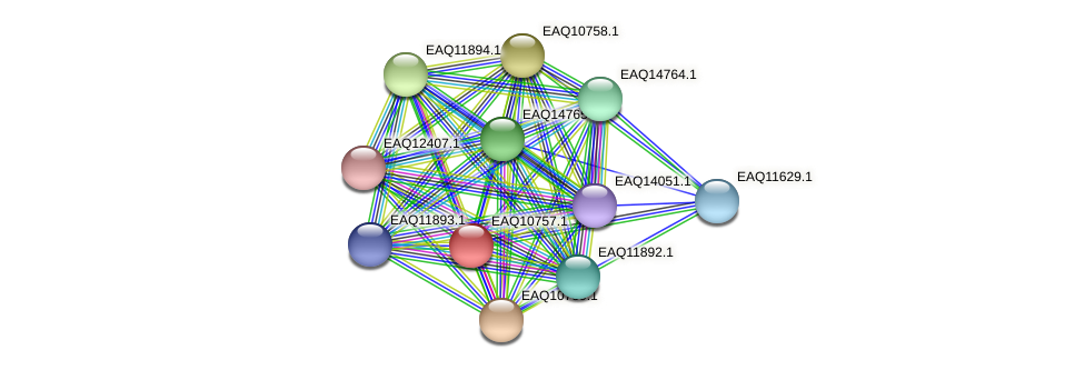 RB2654_05532 protein (Maritimibacter alkaliphilus) - STRING interaction network