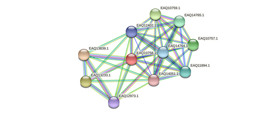RB2654_05537 protein (Maritimibacter alkaliphilus) - STRING interaction network
